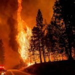 Impact of forest thinning on wildfires creates divisions