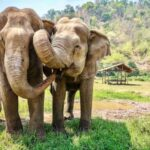 Elephants will cooperate to acquire food — assuming there's enough